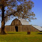Cajun Country  by Dawn di Donato