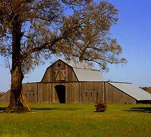 Cajun Country  by Dawn di Donato