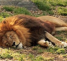 Dreaming Of Africa by SuddenJim