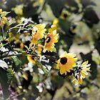 Sunflowers by Rachel Montiel