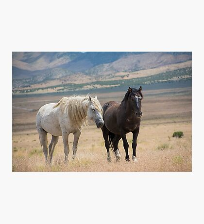 Two old friends Photographic Print