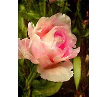Soft as silk ©  Photographic Print