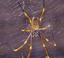 Big Spider by Liz Worth