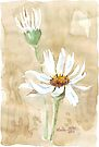 Scattered Daisy leaves by Maree  Clarkson