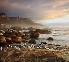 Sunset with the seagulls by fortheloveofit