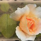 raindrops and a rose by julie anne  grattan