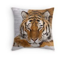 Panthera tigris altaica Throw Pillow