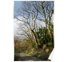 Country Lane - Luxulyan Valley, Near S Austell, Cornwall Poster