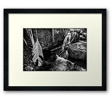 Black and White Forest Framed Print