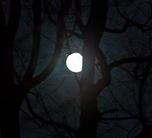 "Super Perigee Moon 3.19.2011 by Christine ""Xine"" Segalas"