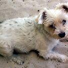 Sand man by Wilhelmina