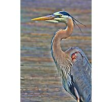 Blue Heron With HDR Photographic Print