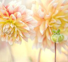 Gentle Dahlias  by JennyRainbow