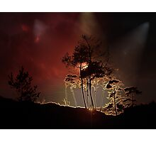 Almost Night Trees Photographic Print