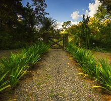 Path to Nature by Glauco Meneghelli