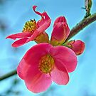 Wild Apple Blossom by 7horses