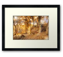 Forest  Framed Print