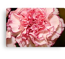 Carnation Edged in Red Canvas Print