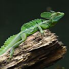 Emerald basilisk - Central america by Marieseyes