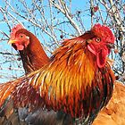 rooster and hen by SusieG