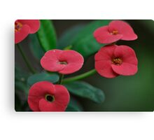 So naturally red and green... Canvas Print