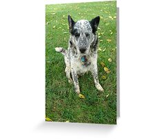 Blue, a working dog Greeting Card