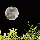 super moon by Stephen Frost