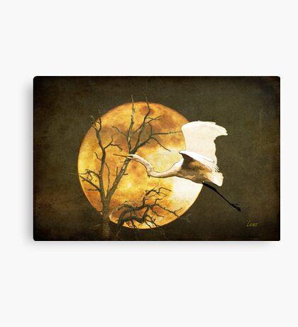 Egret Flying In Moonlight Canvas Print