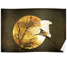 Egret Flying In Moonlight Poster