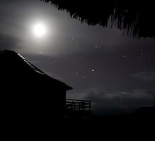 Night sky at jungle's edge by Phil  Hatcher