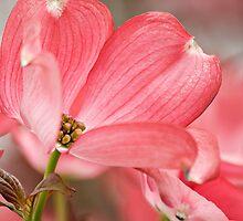 Pink by TeresaB