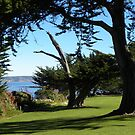 The Park at Lover's Point by Sandra Gray