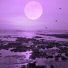 Moonlit Flight by FelicityB