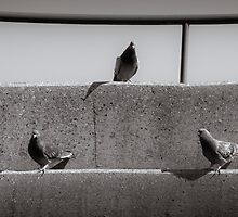 Birds Of A Feather by Eric Scott Birdwhistell