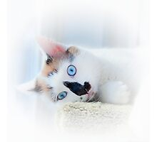 BABY BLUE EYES Photographic Print