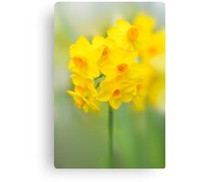 Daffodil Joy Canvas Print
