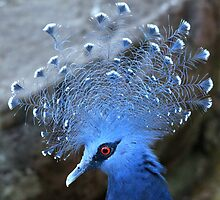 Victoria Crowned Pigeon by DutchLumix