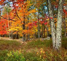 Autumn's Palette by Claudia Kuhn