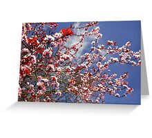 Cheery Blossom,  Greeting Card
