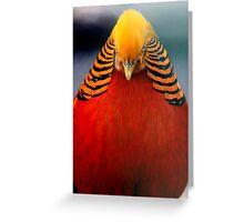 Golden Pheasant 2 Greeting Card
