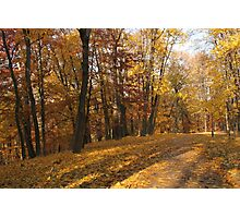 Yellow leaf road Photographic Print