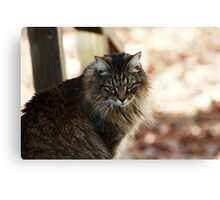 Miss Clyde Canvas Print