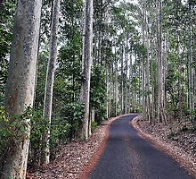 Lined With Spotted Gums by Terry Everson