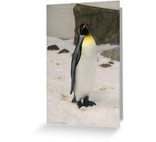 King Penguin, Melbourne Aquarium. Greeting Card