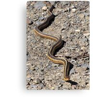 First Snake of the Season Canvas Print