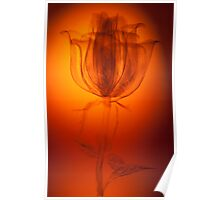 Etched Rose Poster