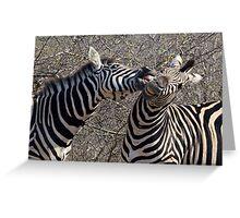 Zebra Dispute Greeting Card