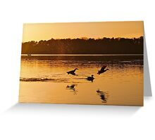 Duck Frolic Greeting Card