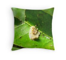 Orchard Swallowtail Butterfly Eggs Throw Pillow