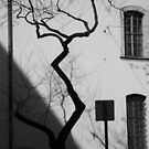 Zig-Zag Tree Budapest by Danielle  La Valle